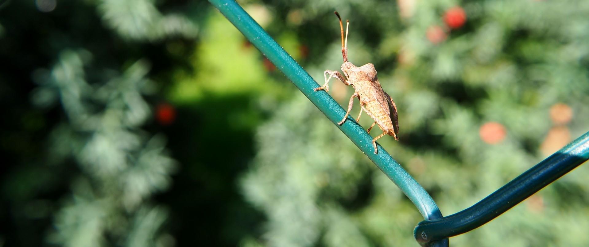 fence-2680715_1920.jpg